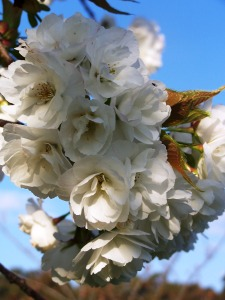 And the blossom unfolds