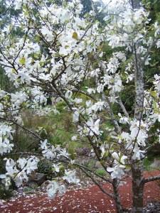 Rocklyn springtime 012