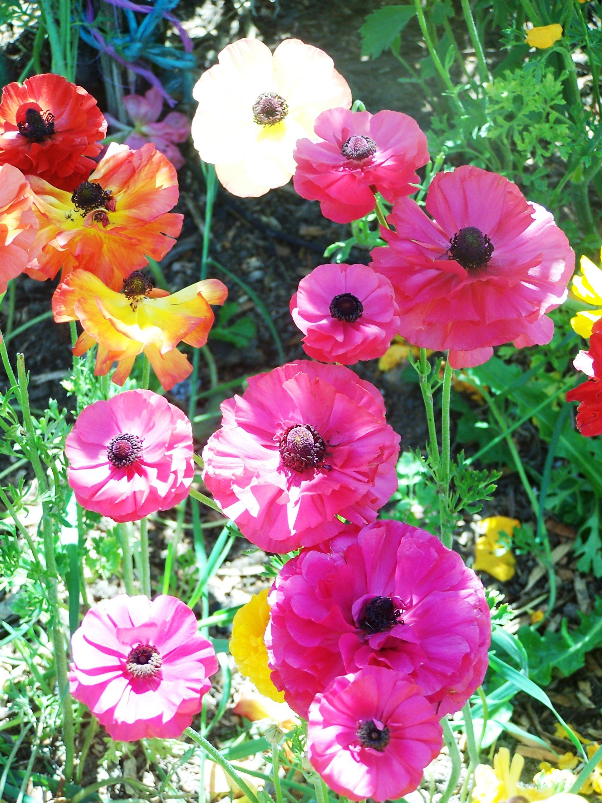 spring garden 006